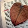 La verità  menzognera dell'amore